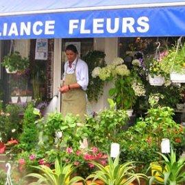Alliance Fleurs]